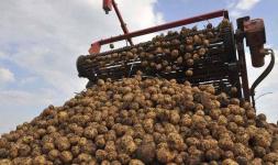 В управлении здравоохранения сообщили о состоянии мужчины, который пострадал при уборке картофеля в Павлодарской области
