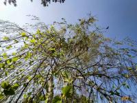 Теплый апрель в Павлодаре прогнозируют синоптики