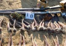 За уничтожение сайгака теперь можно получить пять лет тюрьмы