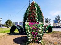 В Павлодаре цветники на центральной площади вновь украшают живыми цветами