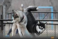 Пять новых площадок для выгула собак обещают установить в этом году в Павлодаре