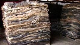 В Казахстане будет введен запрет на экспорт необработанных шкур КРС