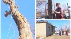Тело второклассника нашли в Жамбылской области