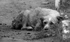 15 запертых на даче собак спасли волонтеры после смерти хозяина в Павлодаре