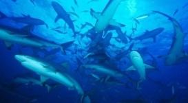 Акула откусила руки двум подросткам на пляже в США