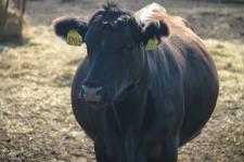 Жители Прииртышья хотят бесплатно раздавать молоко детям детских домов