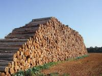 """В резервате """"Ертiс орманы"""" прокуроры обнаружили недостачу леса более чем в 12 тысяч кубометров"""
