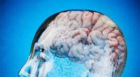 Ученые назвали самый простой и быстрый способ стать умнее