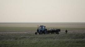Число погибших сайгаков в Акмолинской области возросло до 2 тысяч