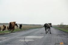 Лошади стали причиной аварии на трассе в Павлодарской области