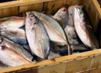 Рыба отдельно, лед отдельно