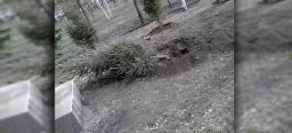Как аким Павлодара елки сажал