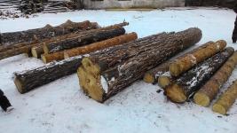 Спилившие 200 кубометров леса работники резервата уверяют, что это сухостой