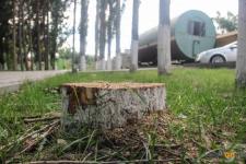 Санитарная обрезка под корень