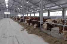 Общественники, посетившие молочно-товарную ферму в Аксу, заявили, что это экологически чистое, современное предприятие
