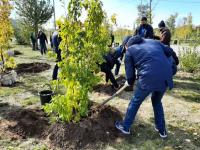 В Павлодаре завершают подсчет зеленых насаждений и готовятся высадить 19 тысяч новых деревьев
