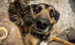 В Экибастузе в результате пожара в центре помощи животным погибли одиннадцать питомцев