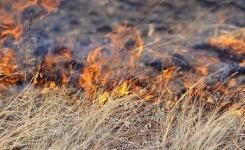 В Павлодарской области 7 часов тушили степной пожар