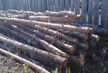 За рубку леса житель Павлодарской области попал под суд