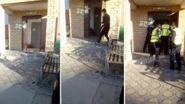 Волка застрелили в подъезде жилого дома в Экибастузе