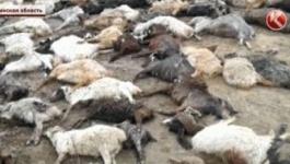 Скот тонет, людей эвакуируют: Кызылординскую область затопило из-за паводков