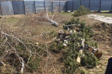 В Павлодаре уничтожили сквер, не дождавшись общественных слушаний