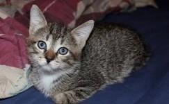 Жителя Беларуси осудили на 15 месяцев за убийство котенка