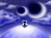 Чем кошки занимаются в одиночестве