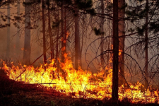 Свыше 50 человек приняли участие в ликвидации лесного пожара в Баянауле