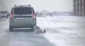 В полиции Экибастуза установили личность владельца собаки, протащившего ее на привязи за машиной