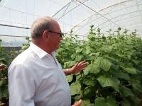 Экологически чистые огурцы местного производства продаются в павлодарских супермаркетах