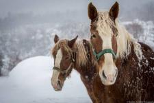 Украденных лошадей стоимостью полмиллиона тенге вернули владельцу