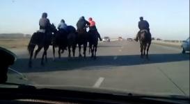 Видео с кокпаром на трассе изучают в полиции Алматинской области
