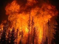 Число жертв лесных пожаров в Португалии возросло до 24