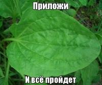 В Павлодарской области в январе больше всего подорожали лекарства и сахар