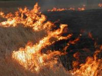 Неосторожное обращение с огнем стало причиной пожара возле трамвайных путей