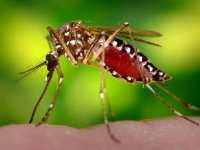 """Дело о """"нашествии комаров"""" в Павлодаре расследуют в Нацбюро"""