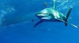 Акула откусила ногу немецкому туристу в Египте