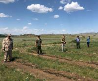 В Павлодарской области увеличивают площадь лесов за счет масштабной высадки молодых сосен