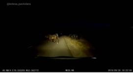 Павлодарские автовладельцы просят принять меры по отношению к безответственным скотоводам