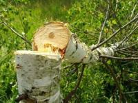 Канат Бозумбаев напомнил лесорубам о необходимости работы в рамках закона