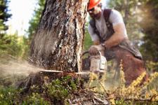 В Павлодарской области в большинстве случаев лесных пожаров и незаконных рубок виновные остаются безнаказанными