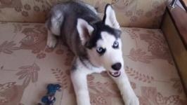 Павлодарские полицейские вернули похищенную собаку владельцу