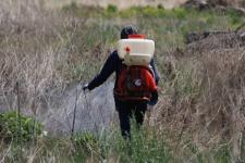 В микрорайоне Зеленстрой начали обработку от комаров и мошек