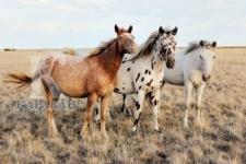 Конь – наше все!