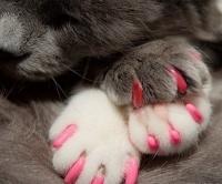 Напёрстки для кошек