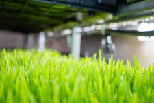 Общественники из Ленинского выиграли грант и будут выращивать гидропонный зеленый корм