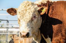 Миллиардные субсидии выделили на поддержку сельского хозяйства Павлодарской области