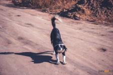 Павлодарка пожаловалась на укус несуществующей собаки