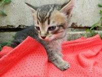 Отдам в заботливые руки двух милых котят!